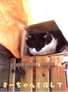 箱詰めのタマ1