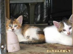 野田分院のそばの建設会社で産まれた子猫たち