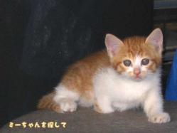 野田の分院そばで出会った子猫