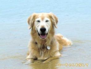 愛犬・ケフィを海に連れて行った