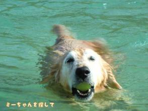 愛犬・ケフィを海に連れて行った2