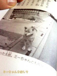 『迷子のミーちゃん』に載っているタロウの写真