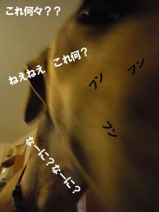 20090917_71.jpg