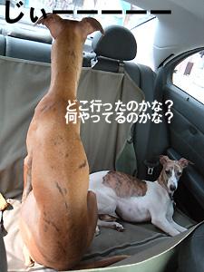 20090927_1.jpg