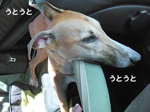 20091011_1.jpg