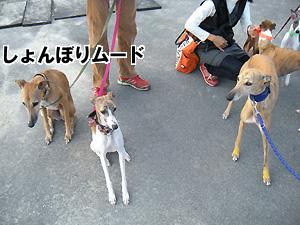 20091011_21.jpg
