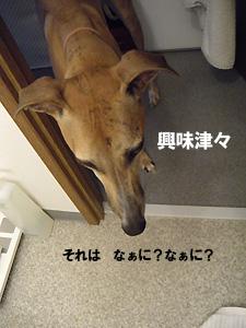 20091016_10.jpg