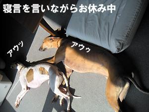20091016_6.jpg
