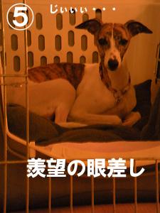 20091024_5.jpg
