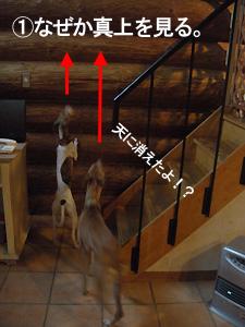 ジョジョスー 階段上