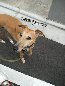 20100315_9.jpg