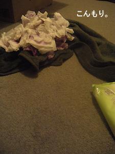 絨毯 染み