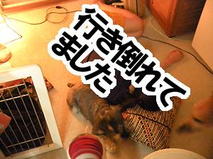 20100828_25.jpg