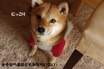 20110209_3.jpg
