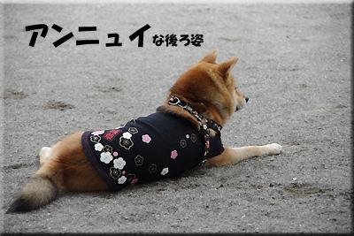 豆柴みかんちゃん