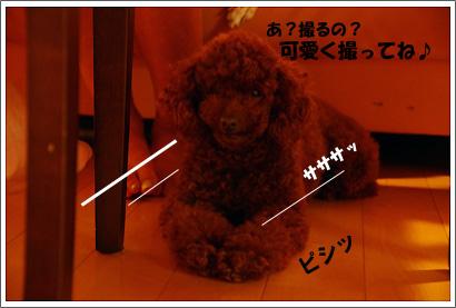 20110905_8.jpg
