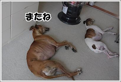 20120107_11.jpg