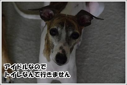 20120213_1.jpg