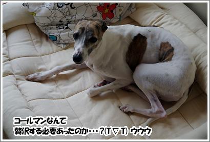 20120410_7.jpg