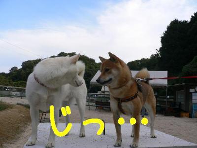10_20091014123154.jpg