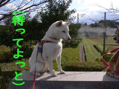10_20091116143916.jpg