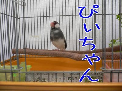 10_20091209001052.jpg