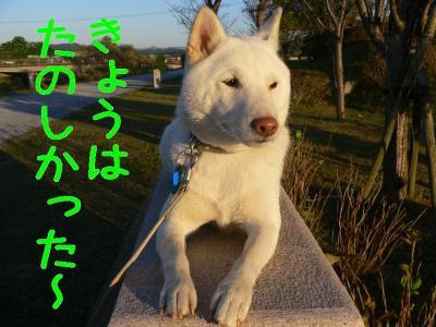 11_20091103205948.jpg