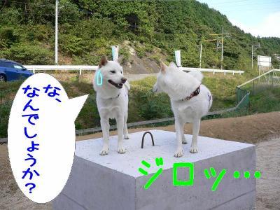 12_20091014123153.jpg