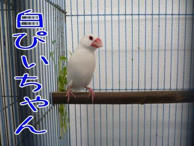 12_20091209001052.jpg