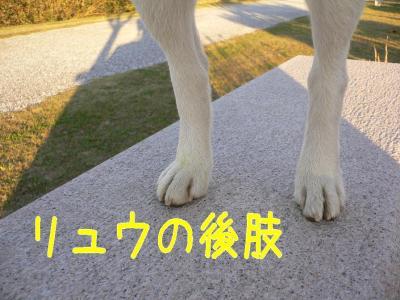 14_20091103205946.jpg
