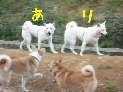 15_20091014123233.jpg