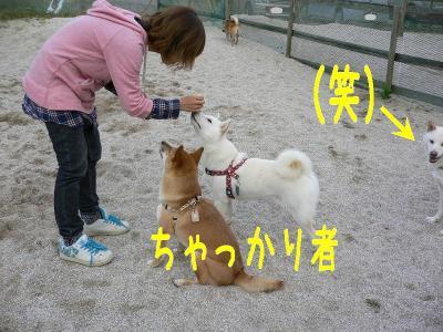 16_20091014123232.jpg