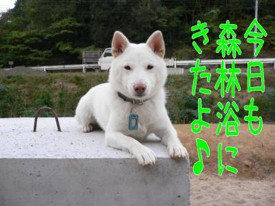 1_20091017203900.jpg