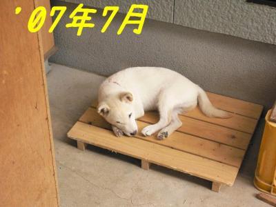 1_20091107220040.jpg