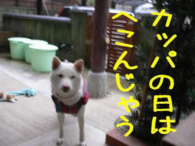 1_20091113200145.jpg