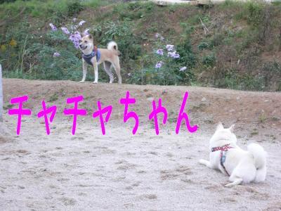 1_20091119214142.jpg