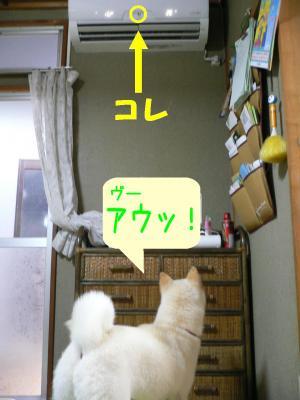 1_20100629133451.jpg