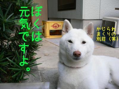 1_20101012221224.jpg