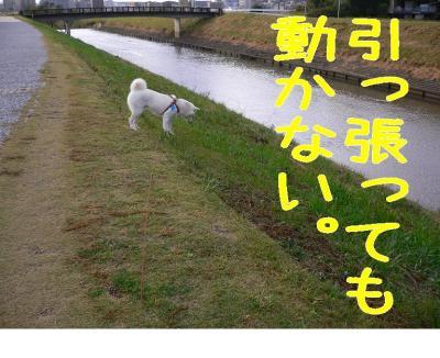 2_20091101202212.jpg