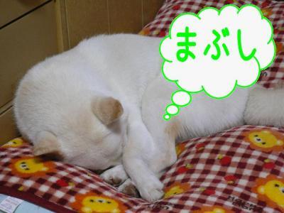 2_20100111213532.jpg