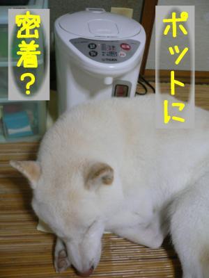 2_20100813214439.jpg