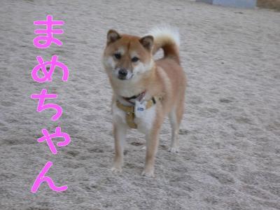 3_20091017203859.jpg