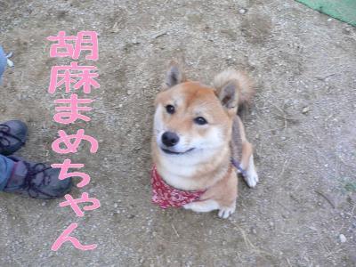 3_20091031201627.jpg