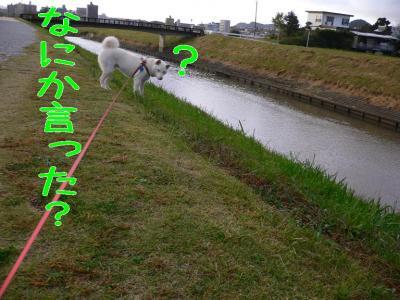 3_20091101202212.jpg