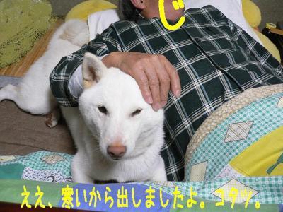 3_20091113200145.jpg