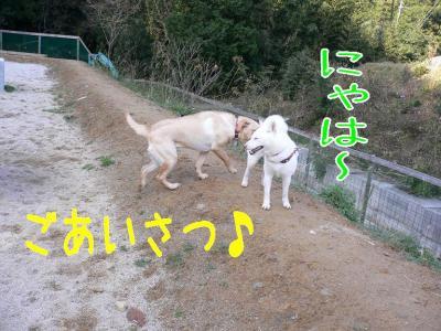 3_20091229220110.jpg