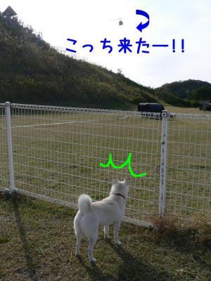 3_20101202214237.jpg