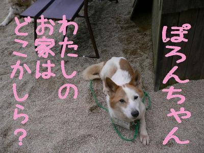 4_20091014123042.jpg