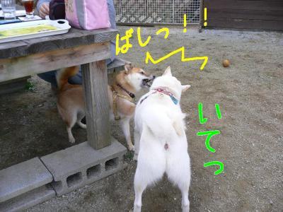 4_20091031201626.jpg