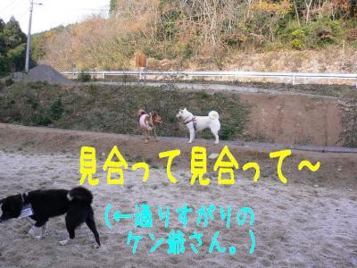 4_20091229220110.jpg